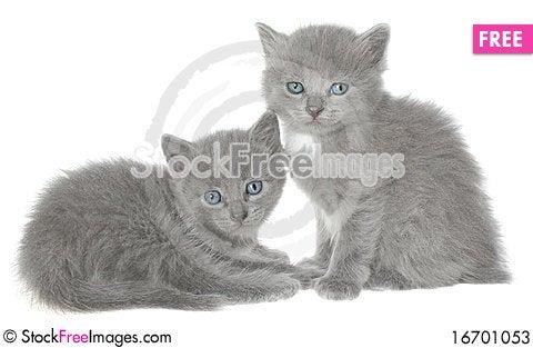 Free Kittens. Stock Photos - 16701053
