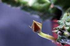 Free Cactus Blossom Stock Photos - 16702343