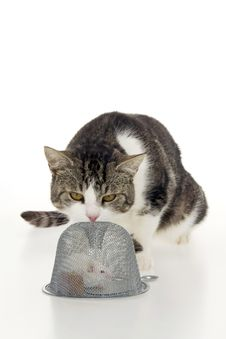 Free Cat Scrutinize Hunted Mouse. Royalty Free Stock Image - 16702626
