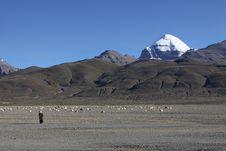 Free Grazing Under Snow Mountain Stock Photo - 16704430