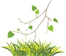 Free Grass And Sprig Of Birch Royalty Free Stock Photo - 16704805