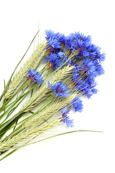 Free Cornflowers And Cereals Royalty Free Stock Images - 16706259