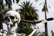 Free Tropical Skeleton Royalty Free Stock Images - 16706639