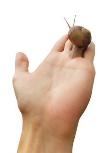 Isolated Hand And Snail Royalty Free Stock Image