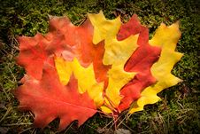 Free Fall Leaves Royalty Free Stock Photography - 16707467