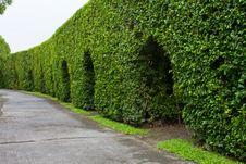 Free Wall Tree Royalty Free Stock Image - 16709366