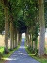 Free Tree Tunnel Royalty Free Stock Photo - 16719095