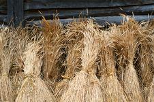 Free Sheaves Of Wheat Stock Photo - 16710120