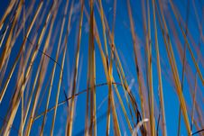 Free Long Grass Royalty Free Stock Images - 16710259