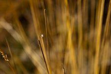 Free Long Grass Royalty Free Stock Photos - 16710278