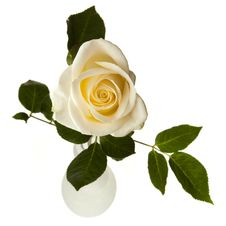 Free White Rose Isolated On White Royalty Free Stock Photos - 16710618