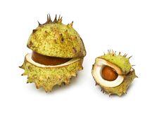 Free Chestnut Stock Photos - 16710783