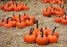 Free Piles Of Pumpkins Stock Photography - 16711552