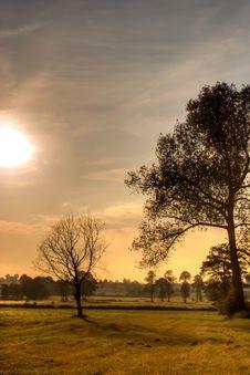 Free Trees Royalty Free Stock Image - 16711726