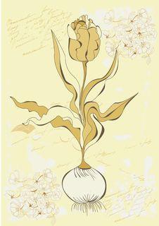 Free Tulip Flower Stock Photography - 16712272