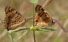 Free Row Of Butterflies Stock Photos - 16712913