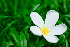 Free Flower On Grass Royalty Free Stock Photography - 16713957
