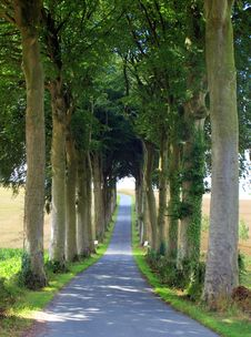 Free Tree Tunnel Royalty Free Stock Photo - 16719095