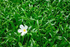 Free Flower On Grass Stock Photos - 16719403
