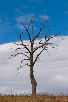 Free Dead Autumn Tree Stock Photo - 16719580