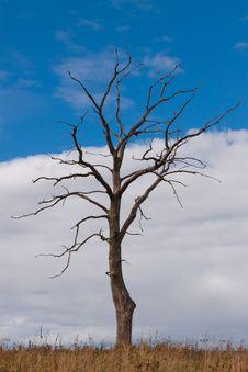 Free Dead Autumn Tree Stock Photo - 16719580