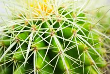 Free Cactus Stock Image - 16719691