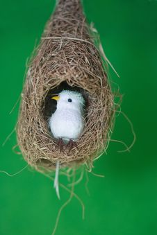 Free Bird In Nest Royalty Free Stock Photo - 16719905