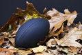 Free Autumn S Big Game Stock Photos - 16722603