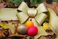 Free Is Your Autumn Of Life Portfolio Diversified Stock Photos - 16722663