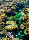 Free Coral Reef Royalty Free Stock Images - 16722949