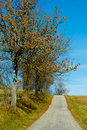Free Road In The Autumn Stock Photos - 16722953