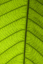Free Close Up Leaf In The Garden Stock Images - 16724564