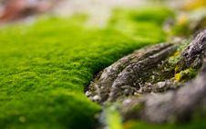Free Green Carpet Royalty Free Stock Image - 16720456