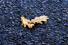 Free Fallen Leafs Royalty Free Stock Photo - 16720475