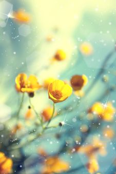 Buttercup. Yellow Flower Royalty Free Stock Photography