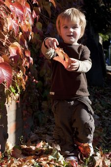 Free Little Boy Playing With Autumn Leaves Royalty Free Stock Images - 16723159