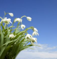 Free Winter Snowdrops Against A Blue Sky Stock Photos - 16723773