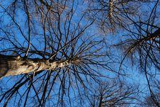 Free Cypress Taxodium 1 Stock Photos - 16723903