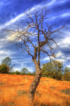 Bare Tree Stock Image