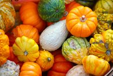 Free Colorful Gourds Royalty Free Stock Photo - 16724915