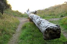 Free Fallen Tree Log On Grass Stock Images - 16725074
