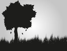Free Tree Silhouette Royalty Free Stock Photos - 16725518