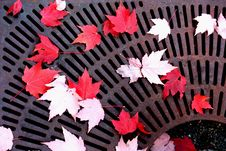 Free Fall Leaves Stock Photos - 16726043
