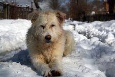 Free Dog Stock Photos - 16726493