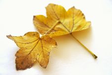 Free Yellow Leaves Stock Images - 16726974