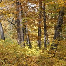 Free Autumn Forest Landscape Stock Photography - 16728222