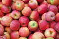Free Red Ripe Apple Stock Photography - 16731632