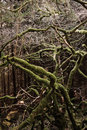 Free Tree In Forest Stock Photography - 16733352
