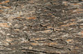 Free Tree Bark Texture Stock Photo - 16733730