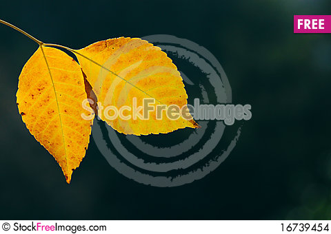 Free Autumn, Colorful Leaves Stock Images - 16739454